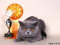 Кошка Брунгильда Грей Гост