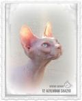 RAPUNZEL IZ ALYENINOI SKAZKI (SPH b 33 02) кошка