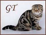 Good Tale - питомник шотландских кошек