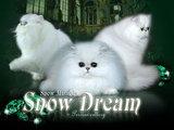 SNOW DREAM (СНОУ ДРИМ)