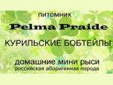 Pelma Praide (Курильский бобтейл)