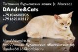 DAndre&Cats