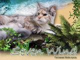 Seven Wind