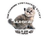 GALA-CAT*RU