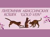 GOLD VEIN питомник абиссинских кошек