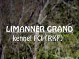 Лиманнер Гранд (Мексиканская голая собака)