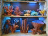 Кораллы ,дудки , ветви , губки , звезды