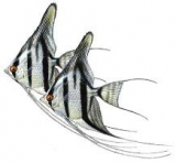 Рыба Московского разведения