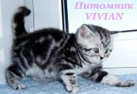 Питомник VIVIAN