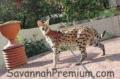 SavannahPremium.com