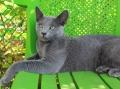 Кот питомника