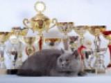 Кошка Августа с кубками