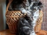Наши котята =^..^=