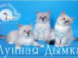 """питомник """"Лунная Дымка"""""""