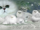 питомник Snow Dream