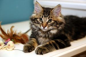 Переезд котенка в новый дом