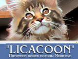 LICACOON