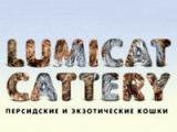 Lumicat (Персидская кошка)