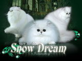 SNOW DREAM (СНОУ ДРИМ)