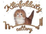 Kliofoldcity