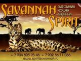 Savannah Spirit