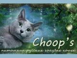 Choop's