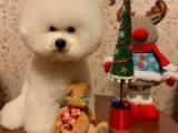 Стар со своими игрушками