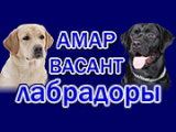 AMAR VASANT / АМАР ВАСАНТ
