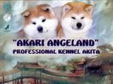 Akari Angeland