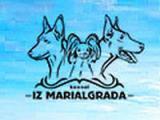 ИЗ МАРИАЛГРАДА (бельгийские овчарки)