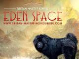 Эден Спейс / Eden Space (Тибетский мастиф)