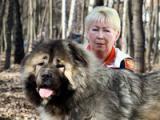 Русский Риск (Кавказская овчарка)