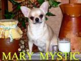 Mary Mystic