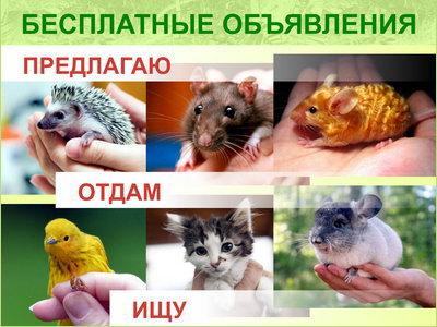 """Бесплатные объявления проекта """"ЗооСправка"""""""