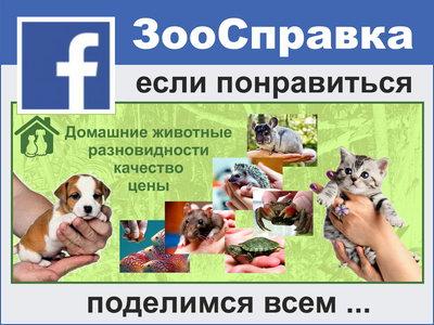 ЗооСправка - Главная | Facebook