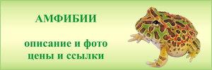 Амфибии в зоомагазинах - средние цены, фото, описание, рекомендации