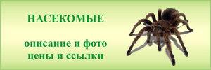 Пауки и насекомые в зоомагазинах - средние цены, фото, описание, рекомендации