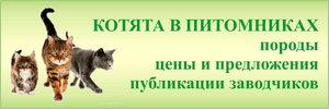 Котята в питомниках - породы, цены, рекомендации, предложения
