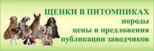 Щенки в питомниках - породы, цены, рекомендации, предложения