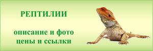 Рептилии в зоомагазинах - средние цены, фото, описание, рекомендации