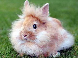 породы кроликов декоративных с фото