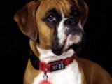 Светящийся брелок для собак