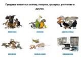 Продажа животных и птиц
